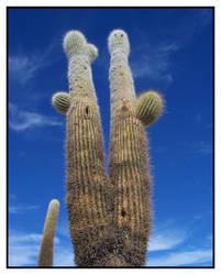Cactus by Random-Squiggle