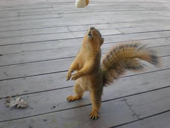 Standing Squirrel by silent-phoenix4