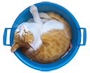 Firefox Cat in the basin icon by Vacon