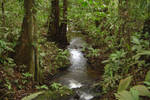 French Guiana Jungle by Kracoucas
