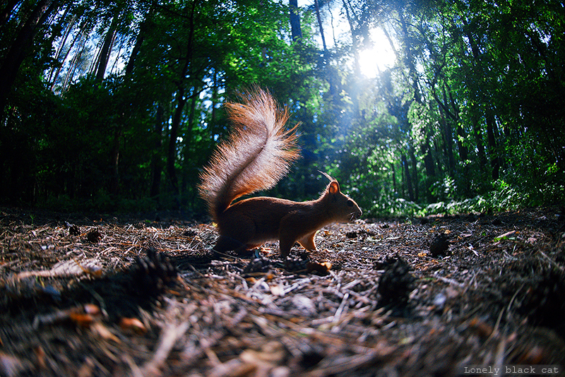 squirrel in the spears of light by Lonely-black-cat