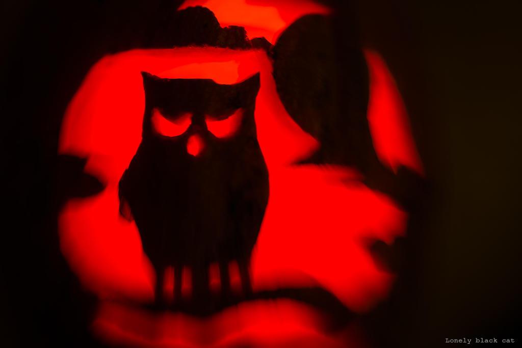 pumpkin owl by Lonely-black-cat