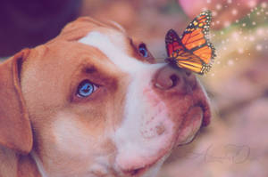 dog with butterfly by AlexandraDante