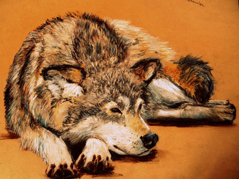 Lying wolf