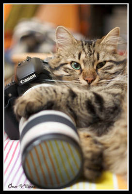 Cats Love Canon