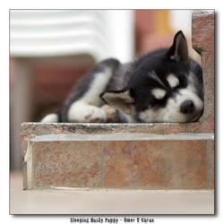 Sleeping Husky Puppy by jevigar