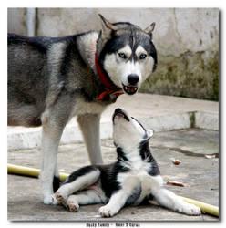 Husky Family by jevigar