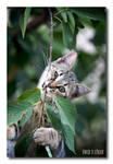 Amazon Cat by jevigar