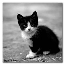 Stray Cats in Istanbul - I