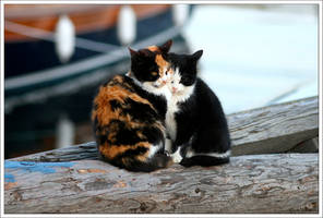 Birliktelik - Togetherness by jevigar