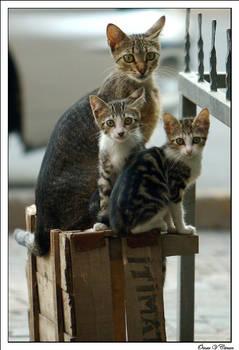 Curious Family