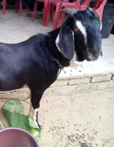 khairul13277's Profile Picture