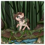 SBC: Rain Forest