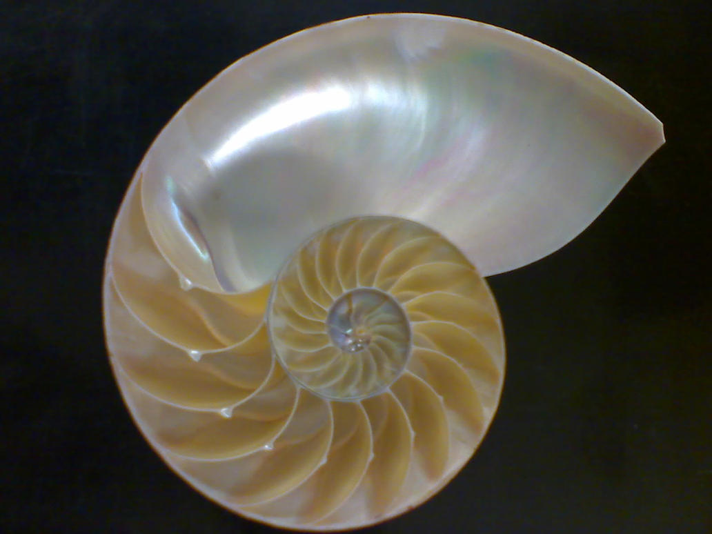 Shell by i0nicgen