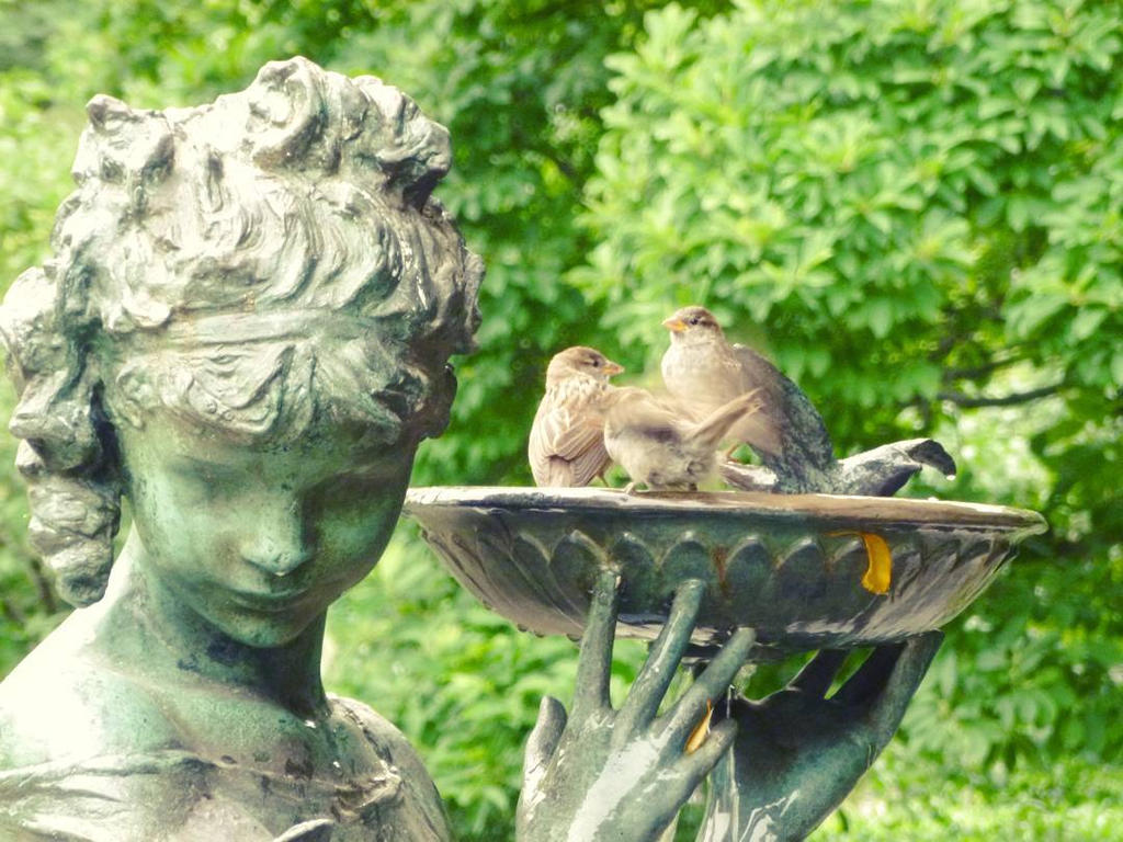 2015 July 2 Bird Bath by Ladyhawke81