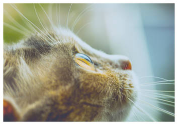 My Cat by TRIS31