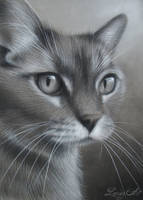Marilly's Cat - Charcoal Commission by secrets-of-the-pen