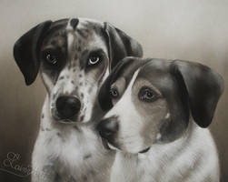 German Shorthair Pointers - Charcoal Commission by secrets-of-the-pen