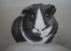 Ringo - Charcoal gift Drawing by secrets-of-the-pen
