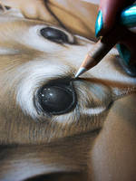 Eric's Chihuahua - Charcoal WIP by secrets-of-the-pen