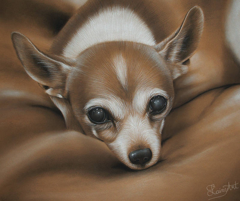 Eric's Chihuahua - Charcoal Commission by secrets-of-the-pen