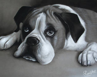 Hailey's Boxer - Charcoal Commission by secrets-of-the-pen