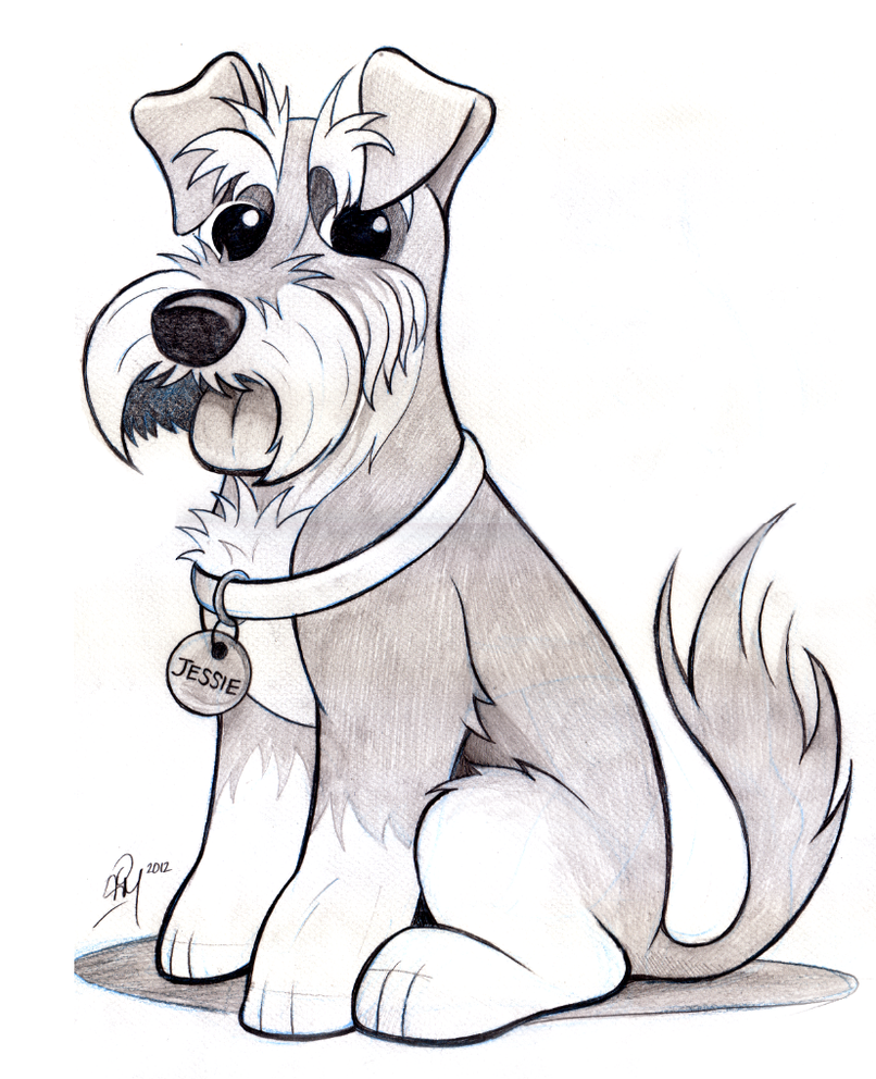 Schnauzer Dog Print Drawing by Kate Sumners