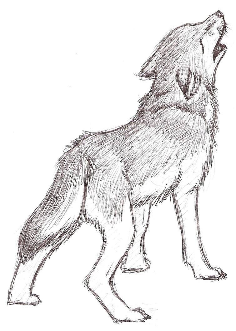 Wolf Howling Sketch By Cool Drawings Of Wolves