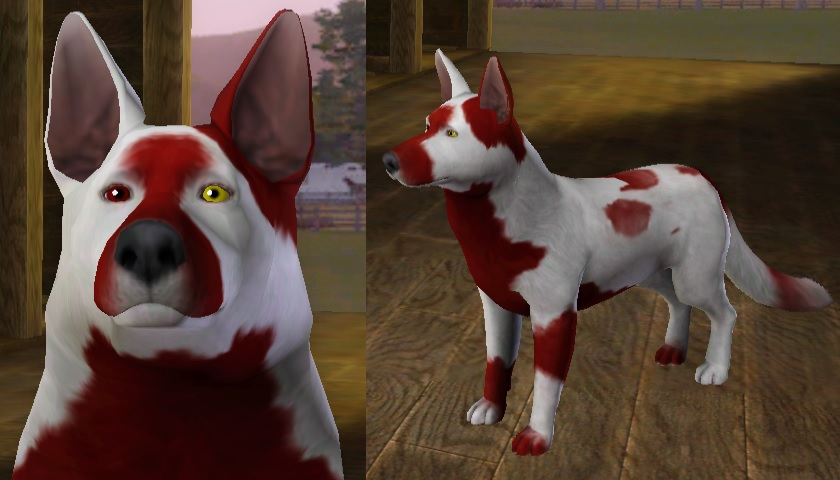 Sims 3 pets SnowBlood Breedable - open by twins6292