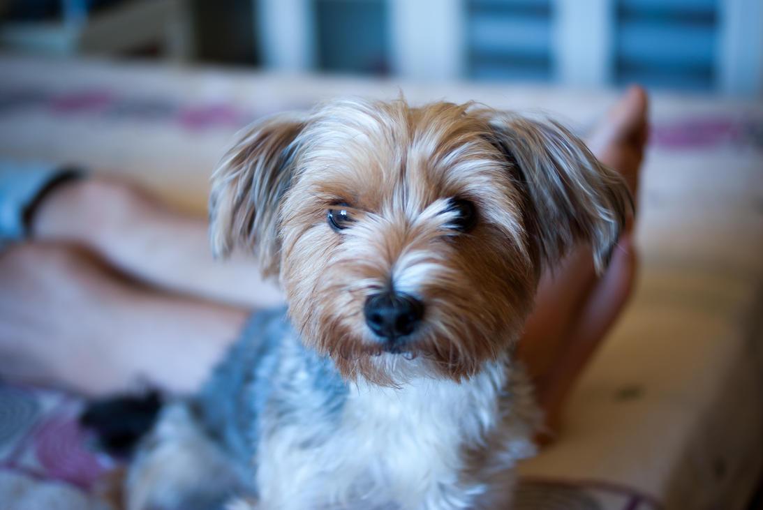 Fluffy Brown Dog Names