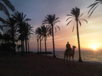 of Palms and Camels by darkokaa