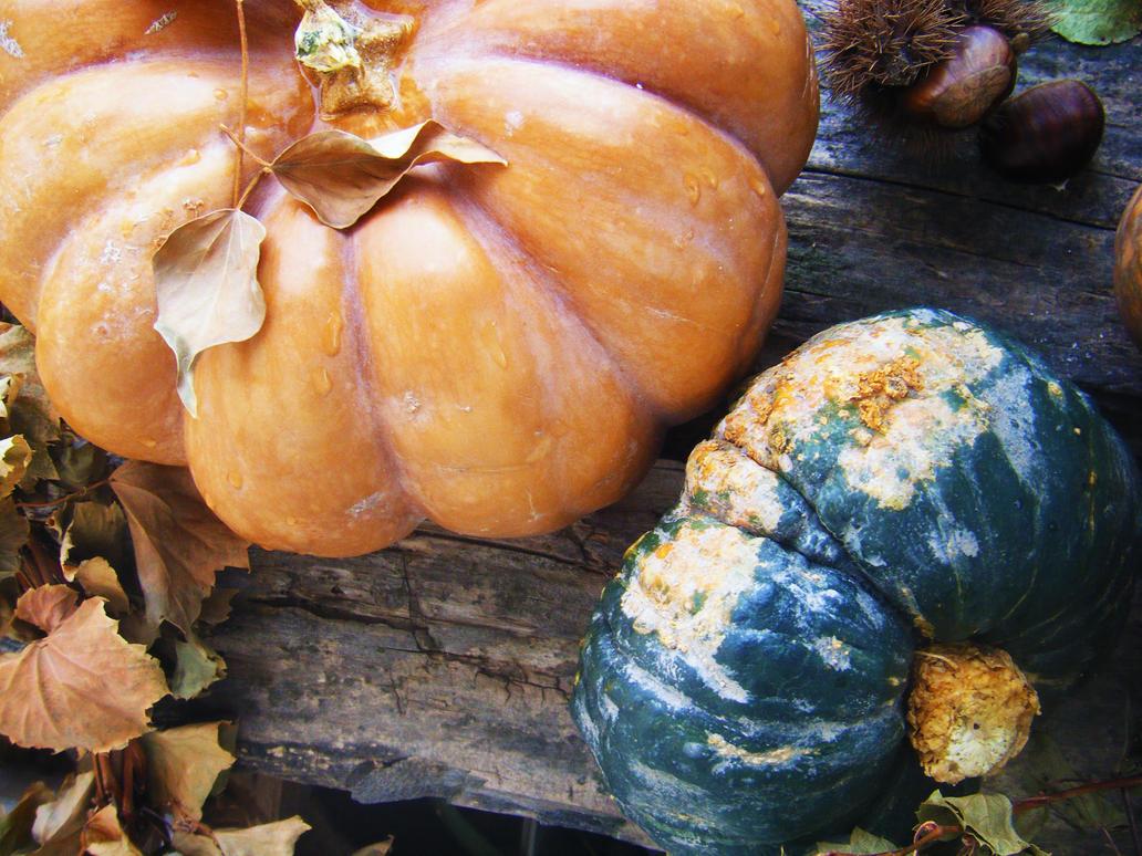 Its Autumn by LTerri