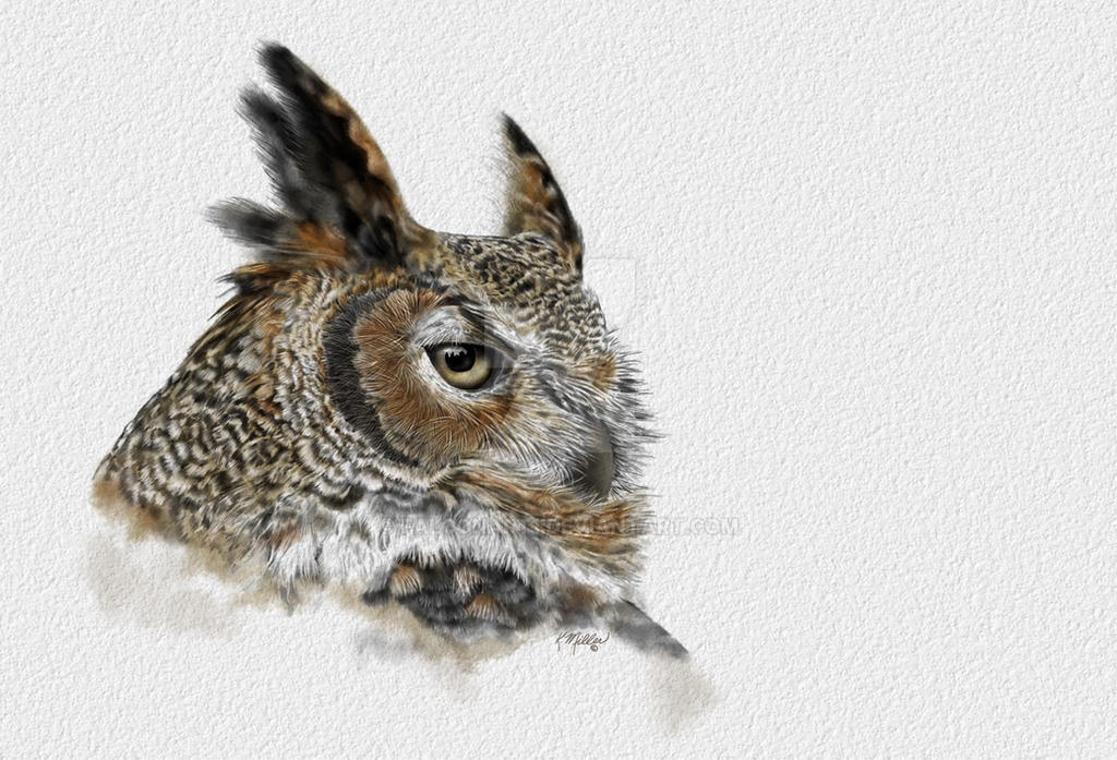 Great horned Owl drawing by falconart1