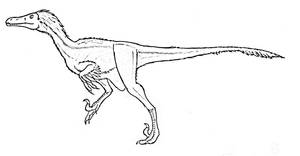 Velociraptor mongoliensis by corvus-crow