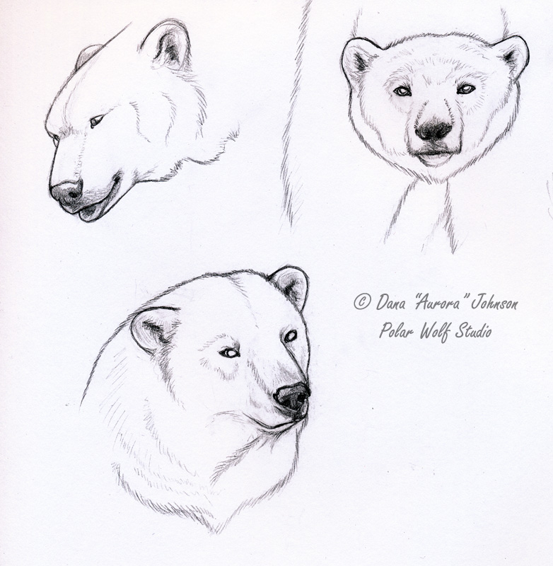 How To Draw A Polar Bear Head | www.pixshark.com - Images ...