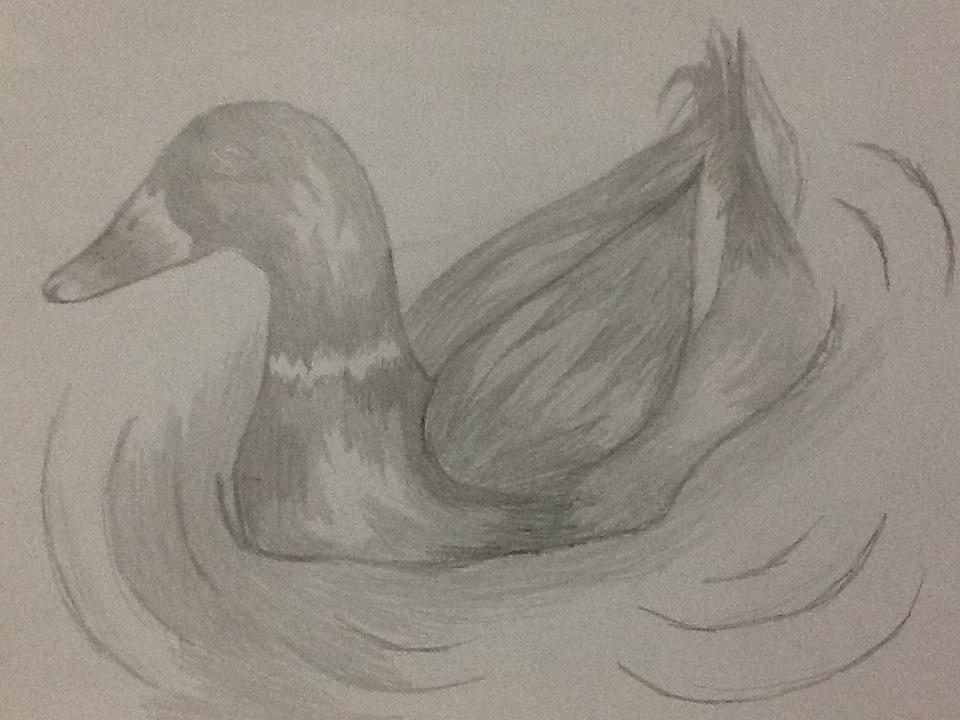 Cambada de desenhos da PoLo - Página 2 Duck_by_ossami-d5v6x0j