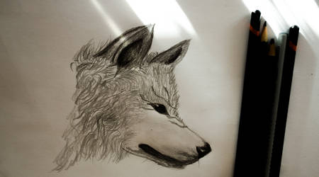 Wolfthumb by ALLROUNDERobert
