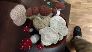 Mushrooms Top