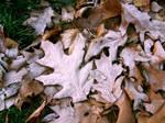 Berlin Frosty Leaves