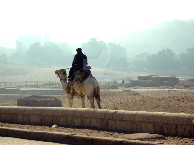 Camel Police Haze