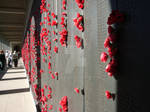 War Memorial Poppies