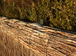 Thatched Fence