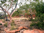 Kings Canyon Trees