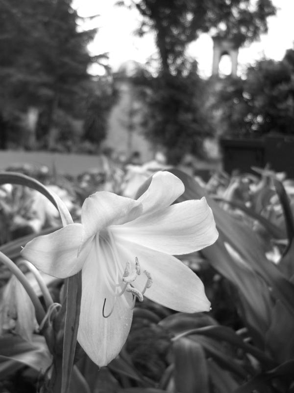 Daylight_Flower