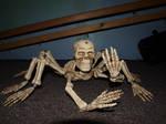 Spider skeleton stock 2