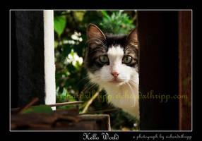 Hello World by richardxthripp