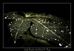 Leafy Droplets 4 by richardxthripp