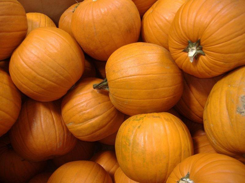 Pumpkins by richardxthripp