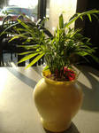 Green Plant in a Yellow Vase