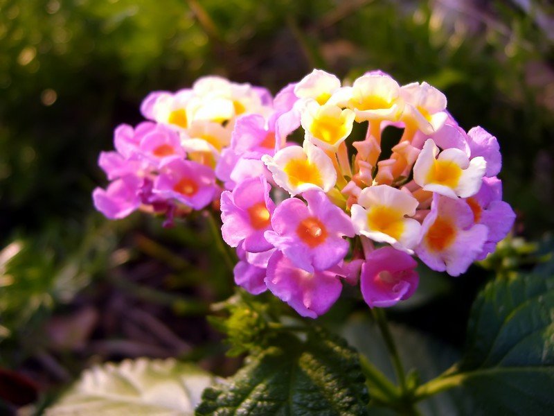 Pink and Yellow Flowers by richardxthripp ...